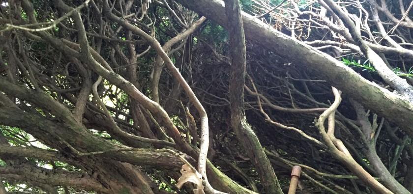 hedge-interior