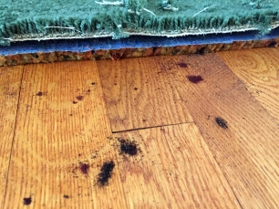 removing carpet - more weird rotted underlayment